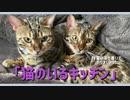 【猫のいるキッチン】