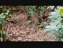 三浦アルプス(森戸川周辺) Part1