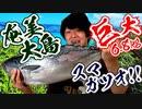 【幻のカツオ】巨大活〆スマガツオを寿司職人がさばいてみた【奄美漁協提供】