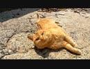 海辺に向かったら防波堤から野良猫がモフられに出てきた。