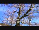 【 旧山陽道 関戸宿跡 】 吉田松陰先生「東遊記念碑」の桜 令和三年春