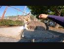 公園にいた猫をナデる。キジ白猫「えっ?もう終わり?」