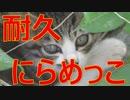 子猫との耐久にらめっこに臨んだがあっけなく撃沈...!!!!