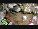 【至福の自然音BGM】岩海を流れる忍ぶ川のサウンド【睡眠・休憩・リラクゼーション】
