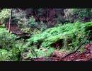 【至福の自然音BGM】雨の森その1【睡眠・休憩・リラクゼーション】