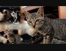 馴れたと思った野良猫の子猫が警戒心をリセット「カリカリはウマウマ喋りながら食べるけどね」