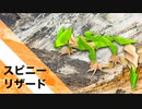 """【折り紙】「スピニー・リザード」 23枚【棘】/【origami】""""Spinny Lizard"""" 23 pieces【thorn】"""