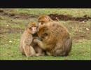 かわいい猿