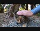 木の根元でグルーミングする野良猫をトントン、ナデナデしてみたゾ