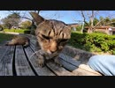 公園のキジトラ猫をモフっていたらもう一匹やって来た