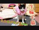 子猫にDIYエリザベスカラーを身に付けて貰ったら仰天の反応だった