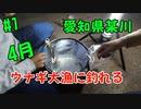【#1 釣り動画】4月にウナギ大漁!愛知県某川で数時間でウナギが大漁に釣れます!