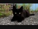 黒子猫のドングリ目『時折チックタックする動きが可愛い』