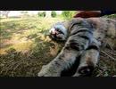 背中を撫でると横になってベロを出したままエアーフミフミする野良猫