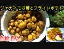 【ぴ】畑で自給自足 無農薬でジャガイモ育ててフライドポテト作った結果