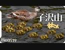 0519B【カルガモ親子 雛鳥子沢山】引越してきた2組が接近。スズメの雛鳥とイソシギ。雛を抱く母鳥の愛情。鶴見川水系恩田川でコンデジ野鳥撮影 #身近な生き物語 #カルガモ親子 #カルガモ