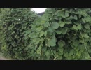 【植木団地】大阪府高槻市川添1丁目にある植木団地です。住宅地に囲まれた広大な土地が同和部落絡みの団体に不法占拠されています。【高槻市富田園芸協同組合】