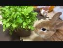 山盛り野菜とうさぎのサリーちゃん