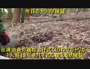 (台湾由来のくくりわなをわしらのトラップワークにも)「人形」トリガーを引きバネ式くくりわなで使えるか検証