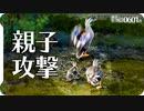 0601B【カルガモ親子連携】母鴨が母と子に襲われるカモの喧嘩。雛が減ったカルガモ引越しの翌日。鶴見川水系恩田川でコンデジ野鳥撮影 #身近な生き物語 #カルガモ親子 #野鳥