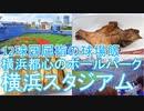 【ハマスタ】とある野球ファンの野球観戦記 @横浜スタジアム20/10/04【球場飯】
