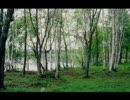 【ニコニコ動画】音のよろず屋さん 森林浴を解析してみた