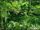 スマブラX「裏の山と森」