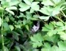 ネコに潜入作戦されていた件