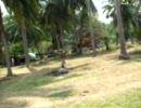 タイ サムイ島 お猿さんのココナッツ採り