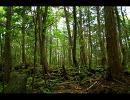 【ニコニコ動画】【ニコニコツアー】 青木ヶ原樹海を解析してみた
