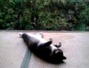 【ニコニコ動画】夕涼みするぬこを解析してみた