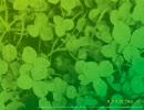 菅野よう子 「Colors in Bloom」 歌詞付