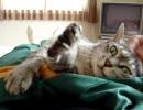 家猫日和 昼寝