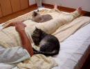 家猫日和 寝室