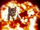 猫カフェ 『猫の部屋 あまえんぼう』マンチカンのつくしちゃん
