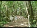 【ニコニコ動画】思わず青木ヶ原樹海に行きたくなる動画を解析してみた