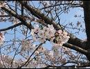 春色のメロディー thumbnail
