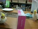 【ニコニコ動画】シンクロナイズド・オカメインコを解析してみた