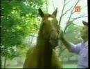 【競馬】伝説の三冠馬 セクレタリアトの生涯(日本語)