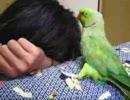 【ニコニコ動画】ローズのキス(08年10月15日)を解析してみた