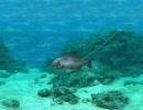 海のぬし釣り 宝島に向かって オープニング+導入部分