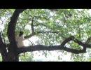 「よつばのクローバー」を歌ってみました。 by absorb thumbnail