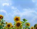 breeze:summer afternoonmix/元気ロケッツ