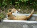 デジカメで撮った猫動画 4.0