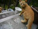 デジカメで撮った猫動画 5.0