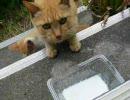 デジカメで撮った猫動画 6.0