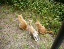 デジカメで撮った猫動画 7.0