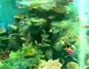 熱帯魚(しながわ水族館)