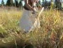 【ニコニコ動画】みつあみの女の子が、大きな鎌でザクザクと草を刈るYieldを解析してみた