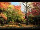 そうだ京都、行こう(その5、2008年京都の紅葉)
